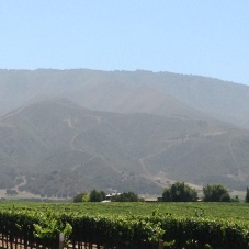 Vineyard and Santa Lucia Mountains