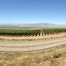 Salinas Valley at Soledad